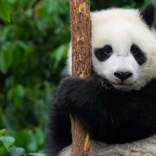 Has Panda 4.0 Put My Website At Risk For A Google Penalty?